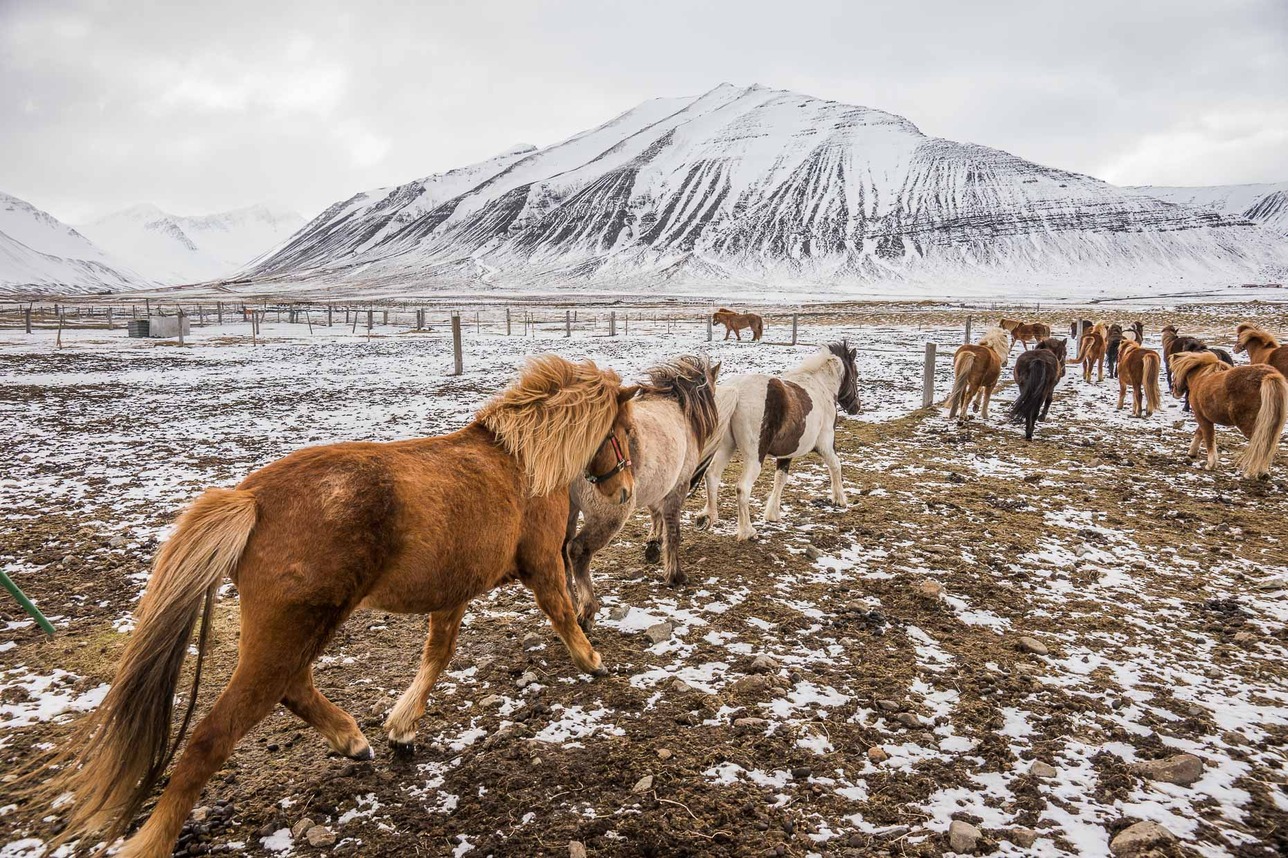 CamMcLeod_Adventure_Iceland_02